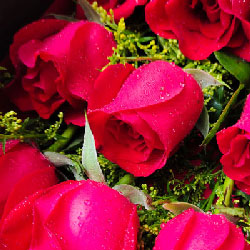 12朵红玫瑰,2支白色多头百合/好想你