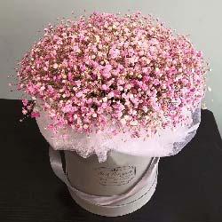 一大扎粉色满天星礼盒装/永远陪伴着你