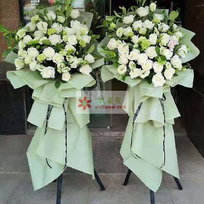 白玫瑰+桔梗/祝昌期开景运