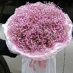 粉色满天星/爱将我们融在了一起