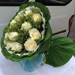 11朵白玫瑰,每一天都快乐