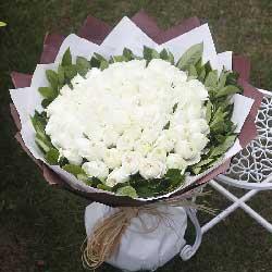 99朵白玫瑰,拥抱幸福