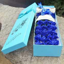 19朵蓝玫瑰,有你生活才有意义