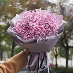 粉色满天星一扎,想念你的人