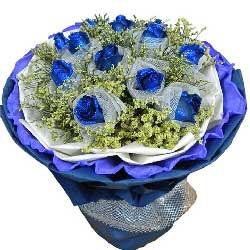 11朵蓝玫瑰,轻轻地说声我爱你
