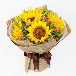 6朵向日葵,愿您节日快乐