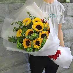 9朵向日葵,祝您一生平安