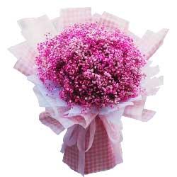 一大扎粉色满天星,你是我的思念