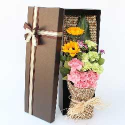 2朵向日葵,6朵粉色康乃馨,礼盒装,好事应有尽有