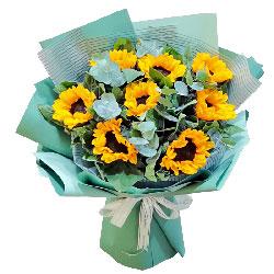 8朵向日葵,深深地祝福您