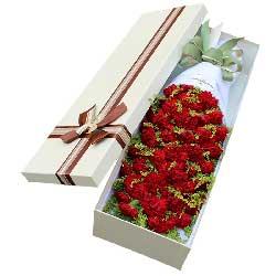 39朵红色康乃馨,殷切的期盼