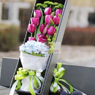 11朵紫色郁金香,2朵蓝色绣球花,对你的思念