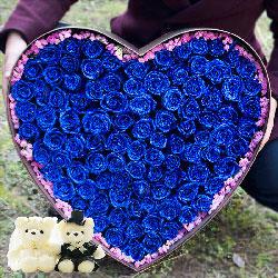 99朵蓝色妖姬,感谢人生有你相陪