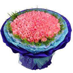 199朵戴安娜粉玫瑰,我为你着迷