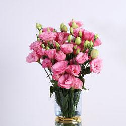 30朵粉色桔梗,瓶插花,甜蜜蜜属于你