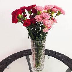 20朵康乃馨,瓶插花,好运围绕在您身边