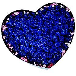 99朵蓝色玫瑰,周围相思梅点缀,愿你我爱得更幸福