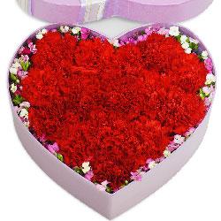 19朵红色康乃馨,礼盒装,不辜您心愿