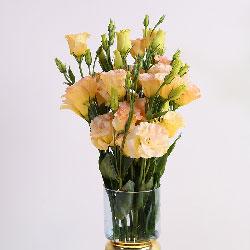 18朵香槟色桔梗,瓶插花,阳光永照