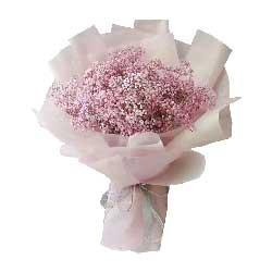 一大扎粉色满天星,永远珍视每一天