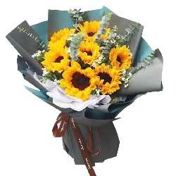 8朵向日葵,祝您永远快乐每一天