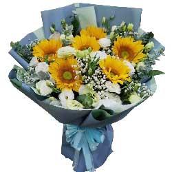6朵向日葵,16朵桔梗,您是我的榜样