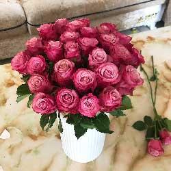 33朵紫玫瑰,和你一起慢慢变老
