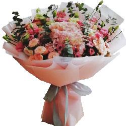 粉色绣球,桔梗花,你是我心中那棵常春树