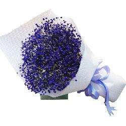 紫色满天星一扎,等待你的出现