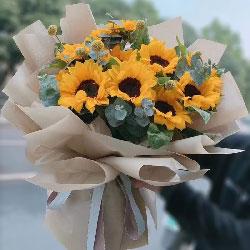 9朵向日葵,谱写青春的诗篇
