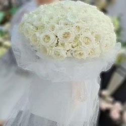99朵白玫瑰,你是我心中最闪亮的星