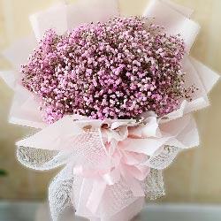 粉色满天星一大扎,起享受开心快乐