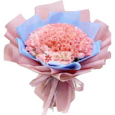 66朵戴安娜粉玫瑰,被你所倾倒
