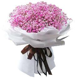 粉色满天星一大扎,温暖的怀抱