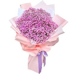 粉色满天星一大扎,只愿一直陪你走