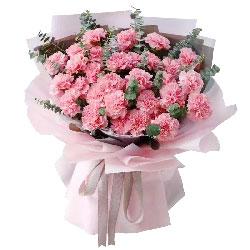33朵粉色康乃馨,幸福长伴身旁