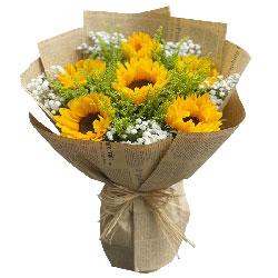6朵向日葵,祝福你前程美好