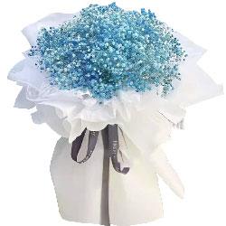 一大扎蓝色满天星,十全十美的爱情